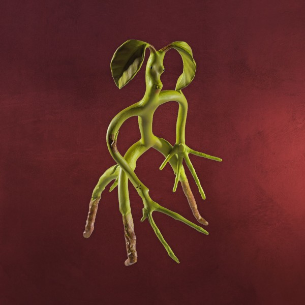 Phantastische Tierwesen - Biegbare Bowtruckle Figur 19cm